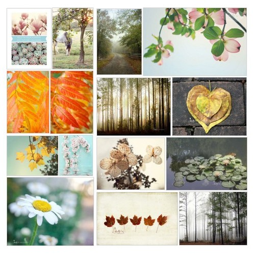 Flowers and Nature Prints @flair4photo #shopify  #shopify #PromoteStore #PictureVideo @SharePicVideo