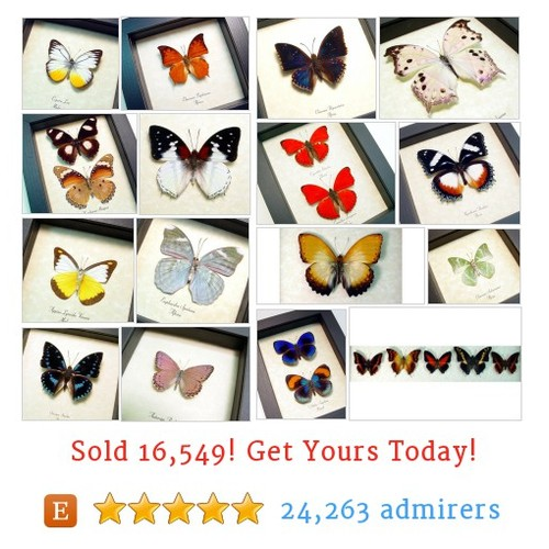 African Butterflies Etsy shop #etsy @real_butterfly https://www.SharePicVideo.com/?ref=PostPicVideoToTwitter-real_butterfly #etsy #PromoteEtsy #PictureVideo @SharePicVideo