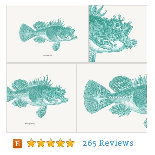 Scorpionfish Print Recovered Vintage #etsy #PromoteEtsy #PictureVideo @SharePicVideo