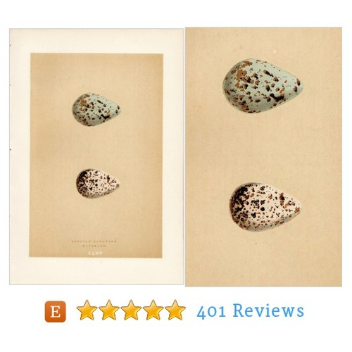1895 Antique Egg Print Morris Blue Egg #art #etsy @theantiqueprint  #etsy #PromoteEtsy #PictureVideo @SharePicVideo