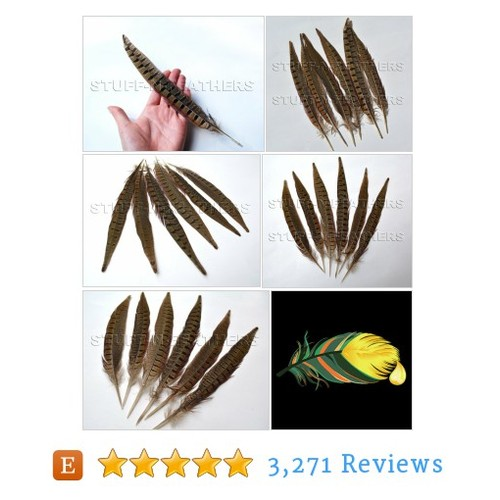 RINGNECK pheasant tail feathers, long #etsy @stuffnfeathers  #etsy #PromoteEtsy #PictureVideo @SharePicVideo