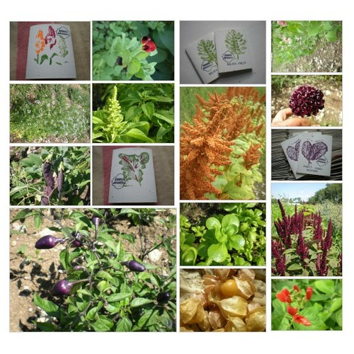 EDIBLE & ORNAMENTAL SEEDS #shopify @edible_antiques  #shopify #PromoteStore #PictureVideo @SharePicVideo