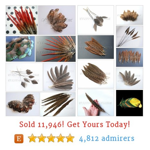 Pheasant / Hen / Guinea Etsy shop #etsy @stuffnfeathers  #etsy #PromoteEtsy #PictureVideo @SharePicVideo