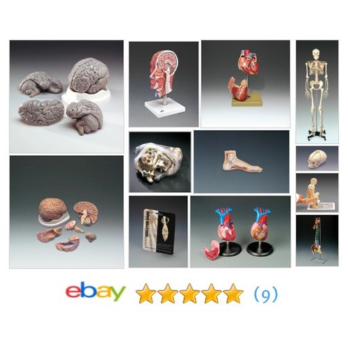 All Categories Items in station7_anatomical store on eBay! #allcategory #ebay @applam1  #ebay #PromoteEbay #PictureVideo @SharePicVideo