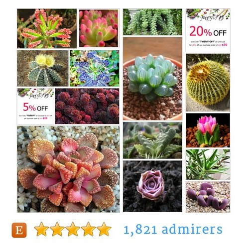 Succulent & Cactus Seed #etsy shop #succulent #cactusseed @fancygardens  #etsy #PromoteEtsy #PictureVideo @SharePicVideo