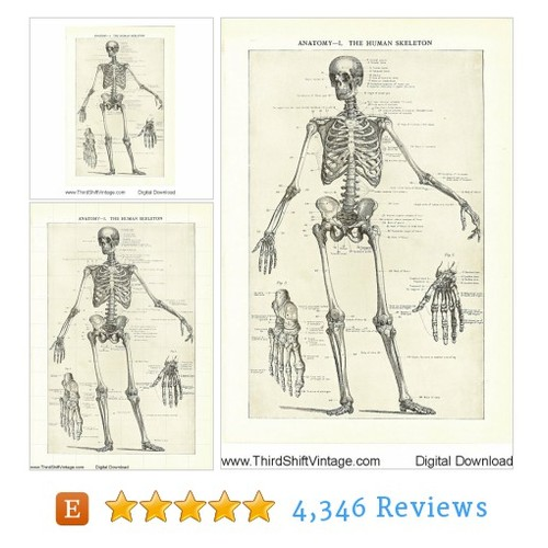 "Digital Download ""Anatomy 1. The Human #etsy @thirdshift3  #etsy #PromoteEtsy #PictureVideo @SharePicVideo"